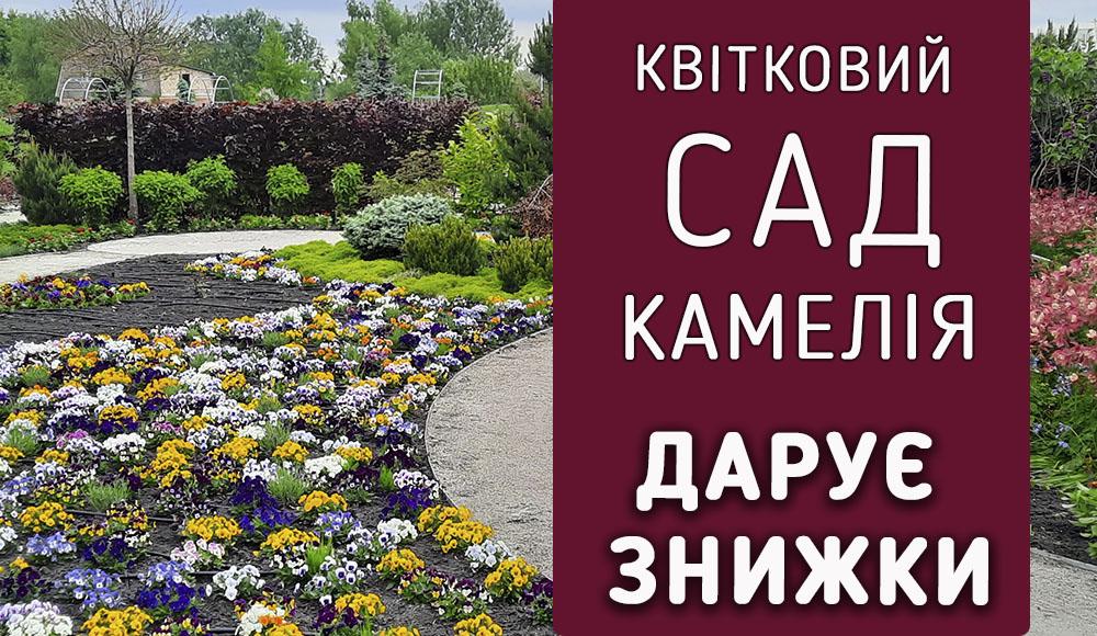 Сад Камелія дарує знижки